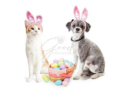 Cute Kitten and Puppy With Easter Basket