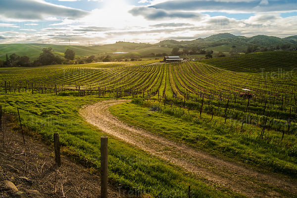 Sweeping view of a Napa Valley vineyard with golden light