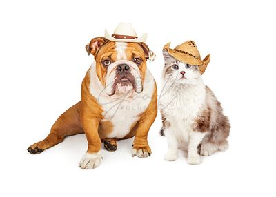 Western Cowboy Cat and Dog