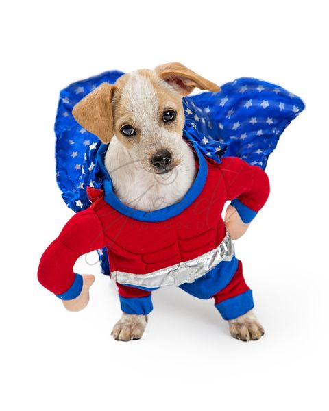 Funny Super Hero Dog Looking Up