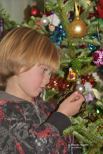 CHRISTMAS TREE 20A - Young boy waiting for Christmas
