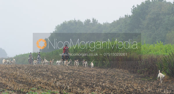 Huntsman and hounds - The Cottesmore Hunt at Tongue End 28/8