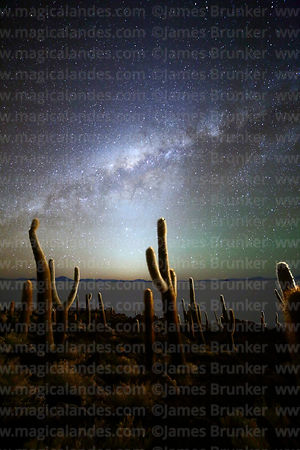 Echinopsis atacamensis (pasacana subspecies) cacti, Milky Way, zodiacal light and airglow, Incahuasi Island, Salar de Uyuni, Bolivia
