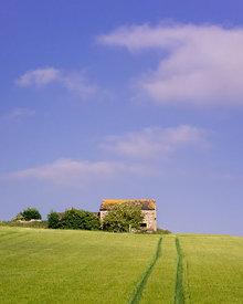 Early summer barn in barley field