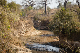 Chitake Springs, Mana Pools National Park, Zimbabwe; Landscape