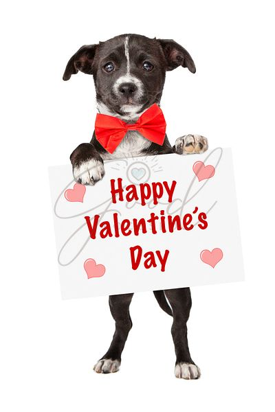 Puppy holding Valentines Sign