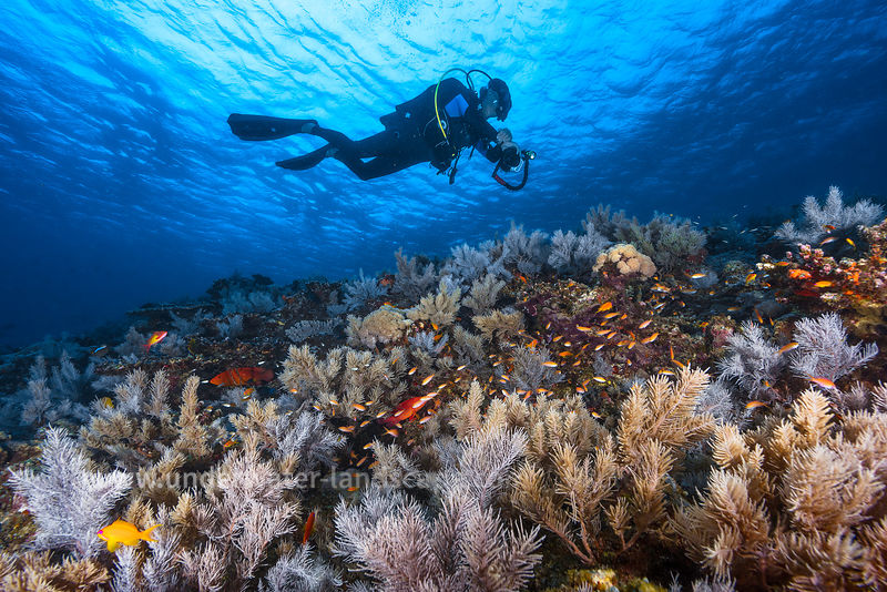Diver at Mayotte island