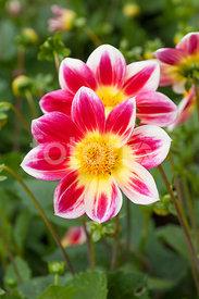 fotoflor, toutes les photos et images de plantes, fleurs, jardins