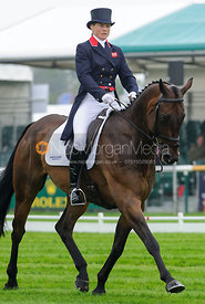 Piggy French and WESTWOOD MARINER - dressage phase,  Land Rover Burghley Horse Trials, 4th September 2014.