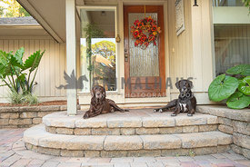 2 chocolate lab mixes lying on front porch of house