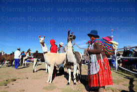 Aymara woman with her llama and baby during competition, Curahuara de Carangas, Bolivia