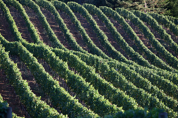 Vines creating beautiful patterns on the hills