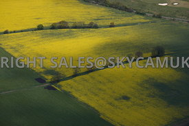 Agricultral Farmland aerial photograph of ripening rape seed plants