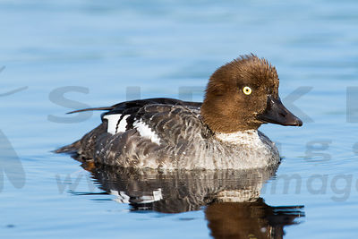 Water Birds photos