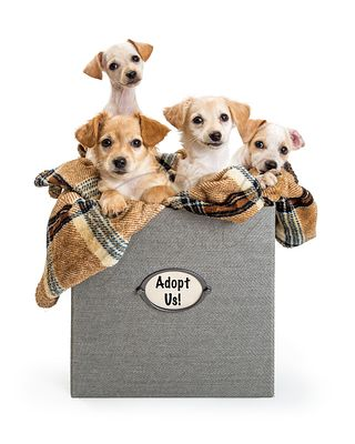Puppies in a Box For Adoption