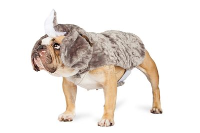 Bulldog In Rhinoceros Halloween Costume