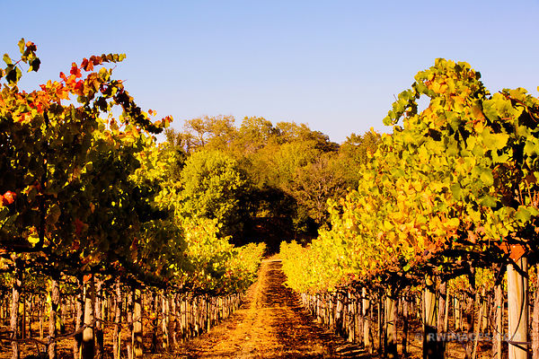 Fine Art Photography Prints Napa Valley
