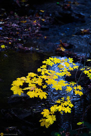 Falls Colors in Nevada City #2