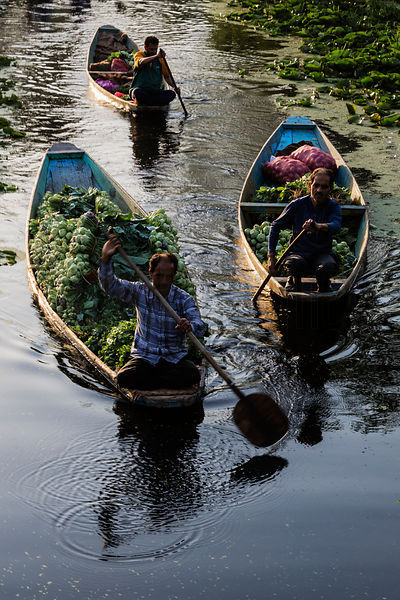 Men Paddling their Shikaras from the Floating Market