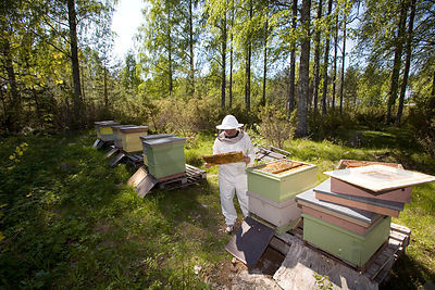 Beekeeping photos