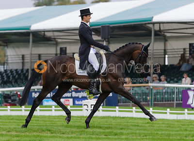 Dressage photos