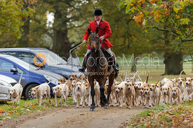 Huntsman George Adams and the Fitzwilliam hounds