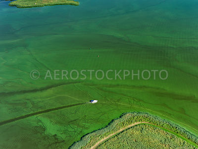 Uitgeestermeer, Blue-green algae, due to the warm weather last month, in many places a lot of Blue-green algae has grown. Blue algae is a cyanobacteria and occurs in fresh and brackish water, temperature and the presence of fertilizers such as nitrates and phosphates accelerate the growth.