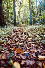 Leaves on a woodland floor.