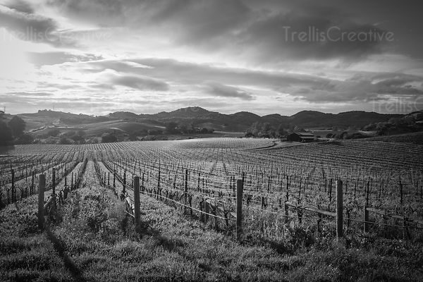 black and white cloudscape over a napa valley vineyard