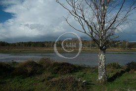 20131103-125949-New_Forest-3229
