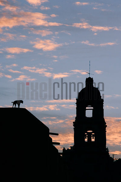 Silhouetted church tower and dog
