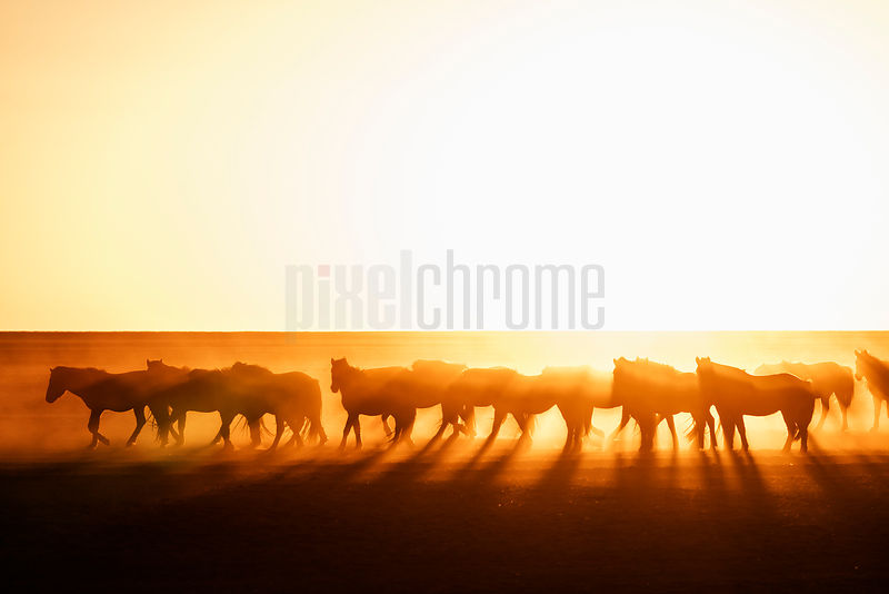 Silhouetted Horses on the Mongolian Steppe at Sunrise