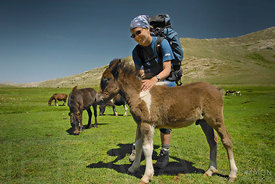 Young woman and small mountain horses