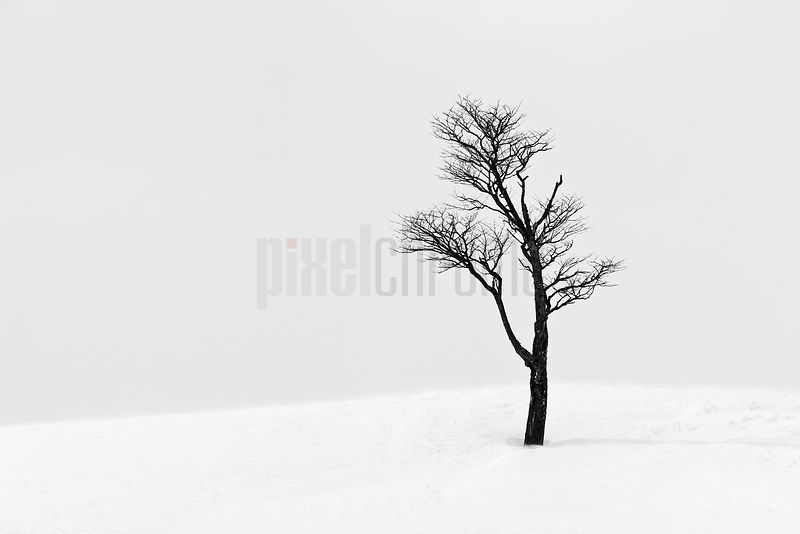 Lone Tree in Snow Covered Landscape