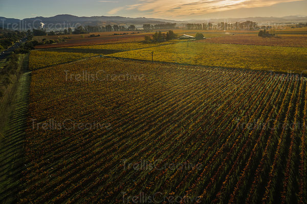 Dramatic vineyard aerial photo in autumn