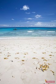 Sandy tropical beach in the Barbados, Caribbean