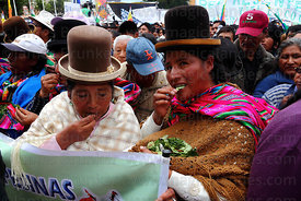 Aymara women chewing coca leaves ( Erythroxylum coca ) at an event to celebrate Bolivia rejoining the 1961 UN Convention , La Paz , Bolivia