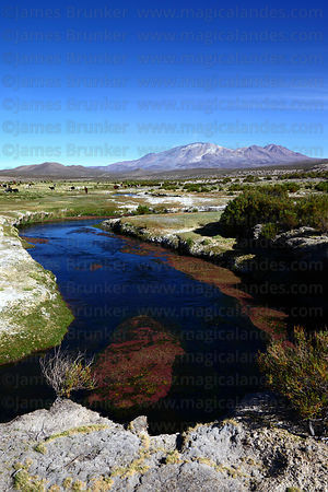 River Isluga flowing across altiplano , Isluga National Park, Region I , Chile