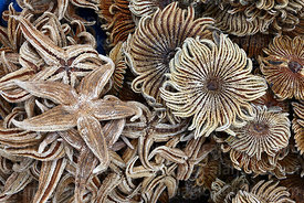 Dried starfish (said to bring good luck) on sale in market, Cusco, Peru
