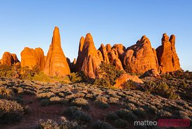 Devil's garden at sunset, Arches National Park, Utah, USA