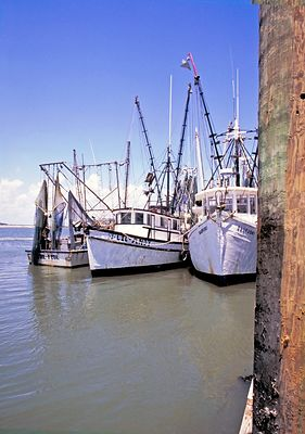 Shrimping Fleet- Hilton Head South Carolina