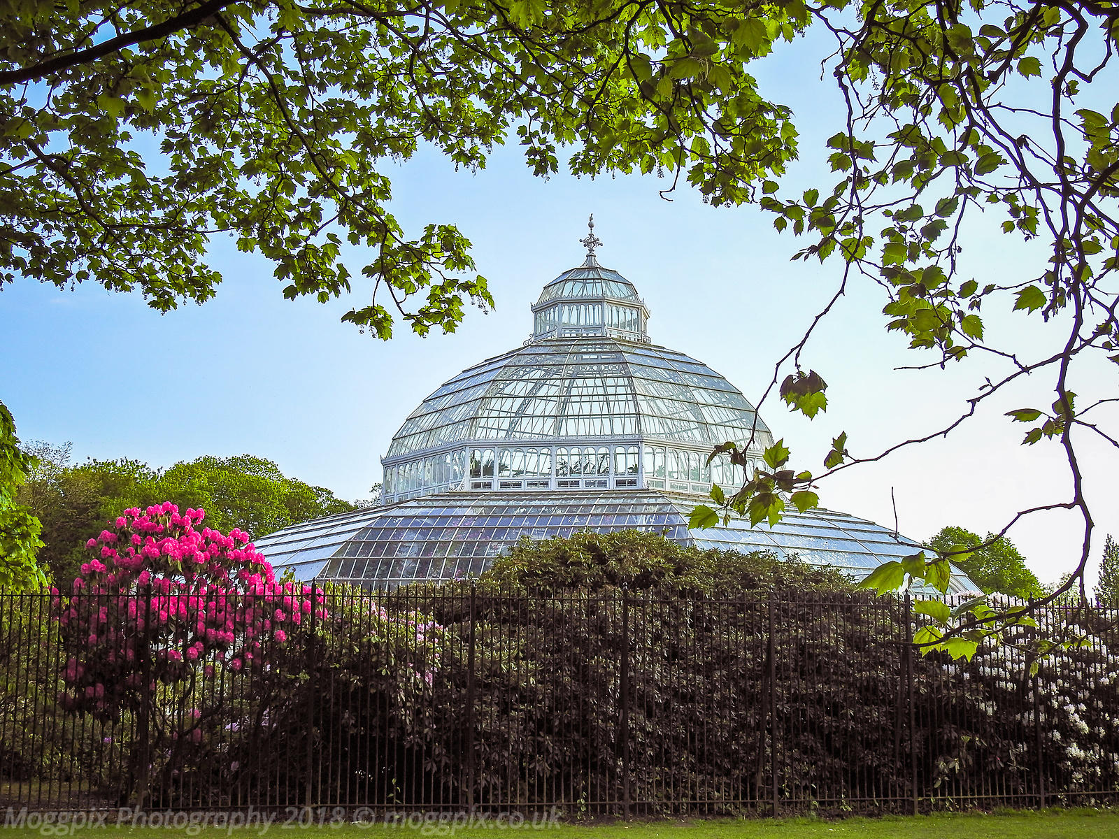 The Palm House, Framed by Nature