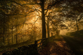 Woodland Wonderland - sunbursts and autumnal mist in the Peak District