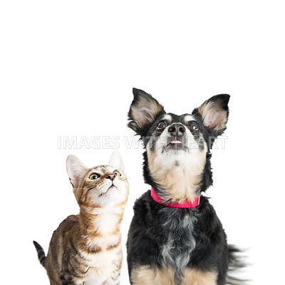 Excited Dog and Cat Looking Up