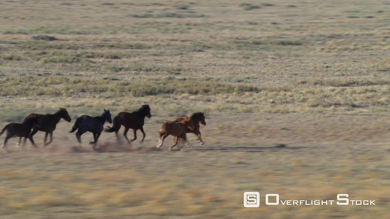 Aerial view of wild horses running on Arizona mesa