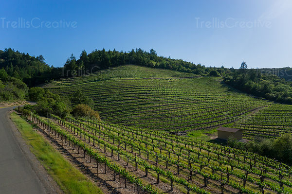 Aerial view of hillside vineyards in the Diamond Mountain appellation in Napa Valley