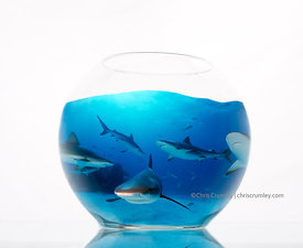 Composite of a glass fishbowl with a picture of six sharks underwater