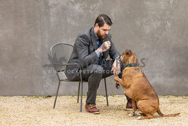 man insuit on chair playing with boxer dog