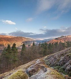 Winter frost on Abbey bank above Derwent reservoir