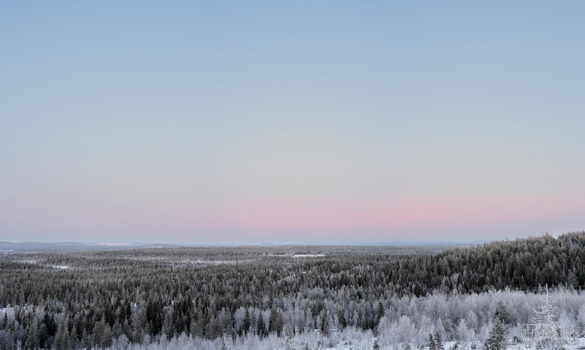 Dusk on winter forest seen from above